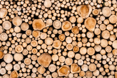 Specflue Supports Wood Stoves as Whitehall Announces Consultation
